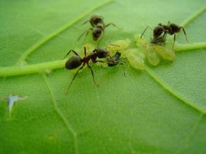 Ant Control SWAT Environmental Services Navan Meath Ireland