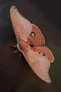 Moth Control SWAT Environmental Services Navan Meath Ireland