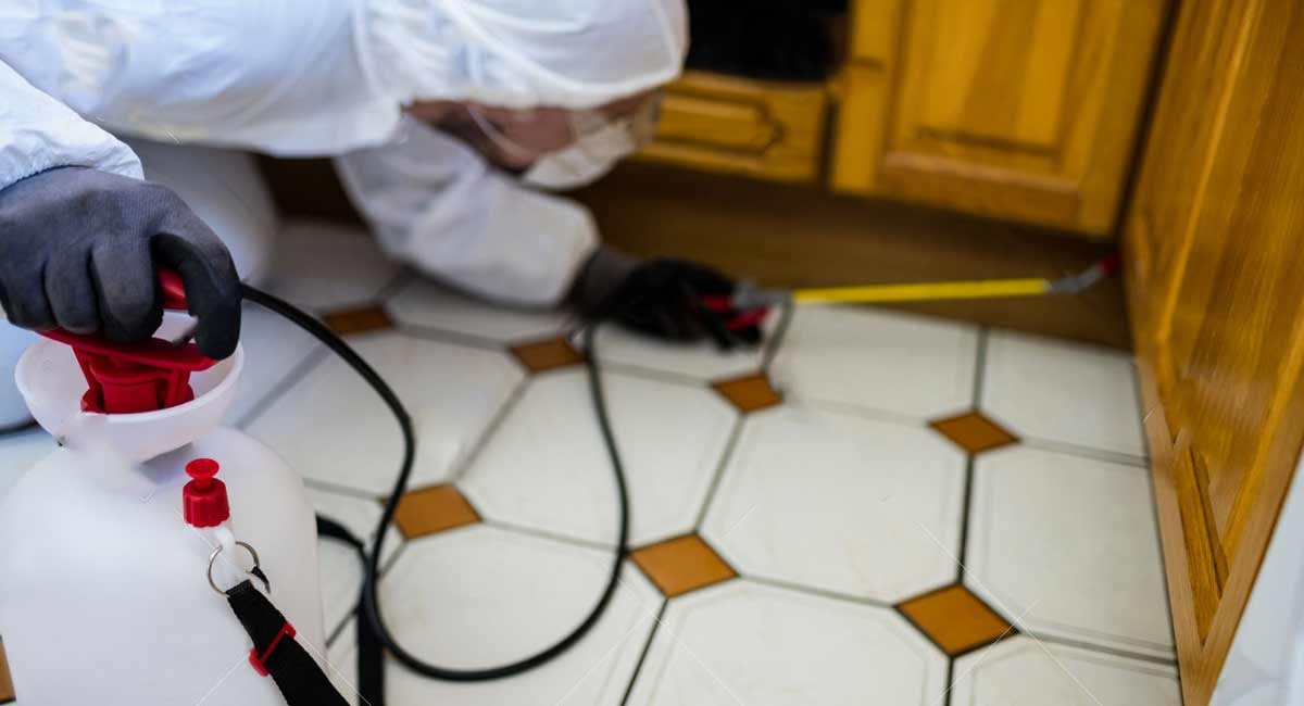 Pest-Control-in-Kitchen-SWAT-Environmental-Services