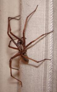 Spider Control SWAT Environmental Services Navan Meath Ireland